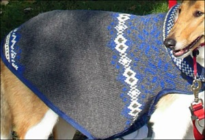 One of the Can-Do Canines sweaters.