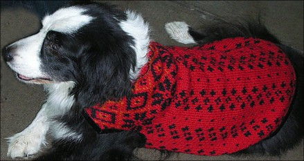 One of the nine sweaters Paul knit for Can-Do Canines.
