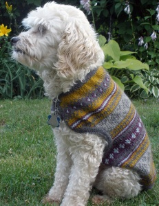 Paul's dog, Gussie, models the completed dog sweater.